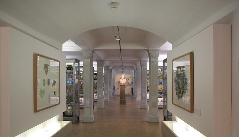 Medizinhistorisches-Museum-virchow-bueste