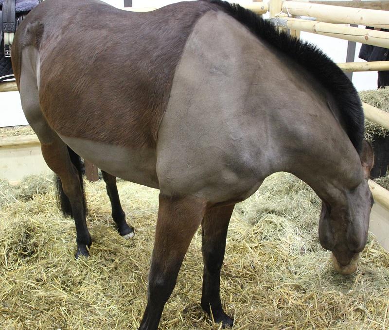Pferd frisst heu